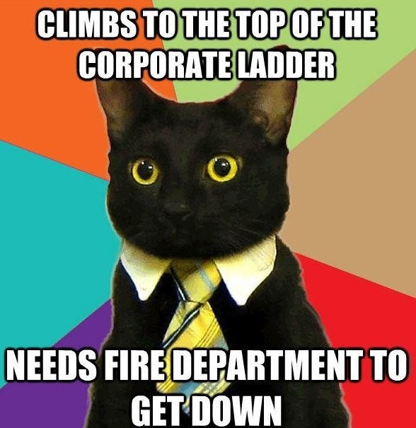 Cat meme - Climbs to the top of the corporate ladder --- needs fire department to get down.  HAHA