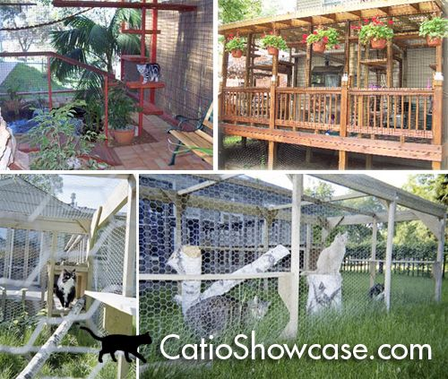 Best Cattery Ideas Images On Pinterest Outdoor Cats Cat