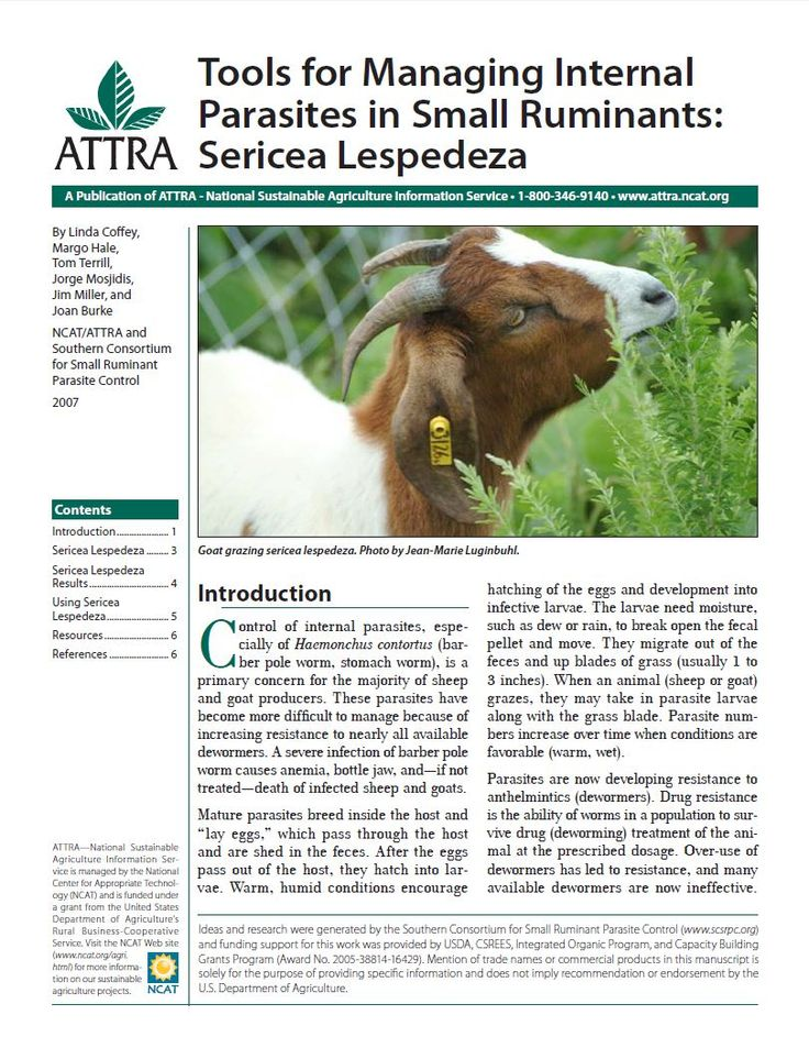 Tools for Managing Internal Parasites in Small Ruminants: Sericea Lespedeza | ATTRA