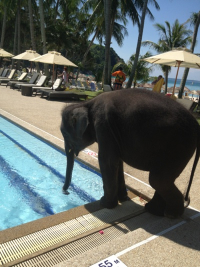 swimming pool...: Pets Animals, Post, Baby Elephants, Pet Elephant, Baby Animals, Place, Drinks, Pools, Elephants 3