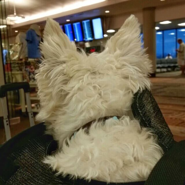 Back at the airport to fly my fav pet friendly airline @southwestair. Wonder what gate my flight to #OKC is at?