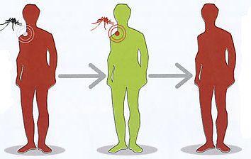 zanzare trasmettono malattie