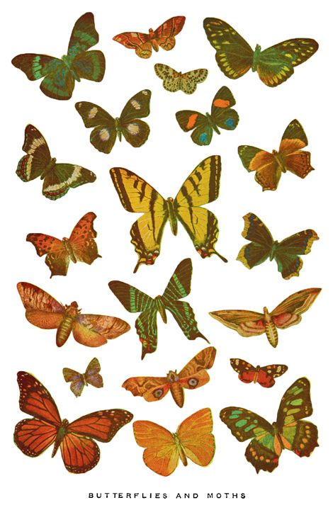 Printable illustrations of butterflies, by Cathe Holden.