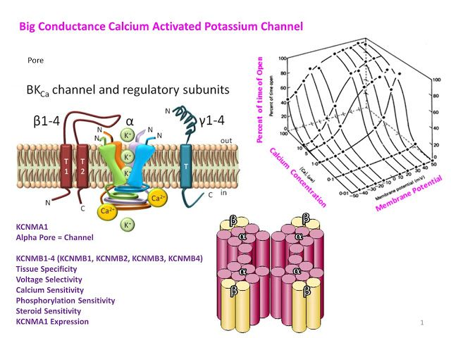 Education: Big Conductance Potassium Channels.   So today we continue on the potassium channel journey and today we do the calcium activated potassium channels There are small conductance intermediate and big conductance calcium activated potssium channels called the SK channels and theBKchannels.  They are so called because of their small single channel conductance in the order of 10 pS(picoseimens = unit of electrical conductance The SK channel family contains 4 members -SK1SK2SK3 andSK4…