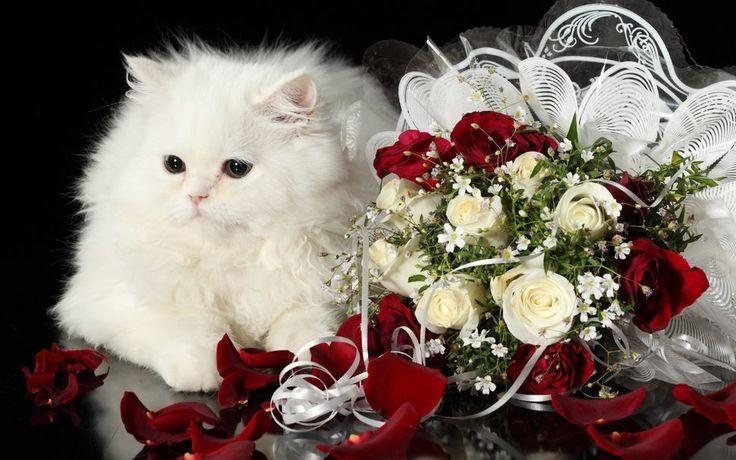 ♥♥♥ Krásné bílé kočky a růží... vektor
