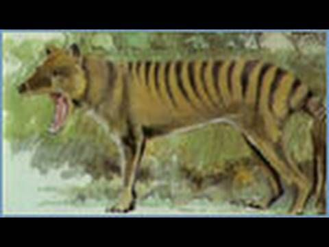 Animal X Natural Mystery Unit - The Mystery of the Thylacine