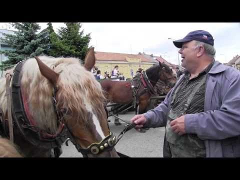 KUNOVICE-JÍZDA KRÁLŮ: Formanské odpoledne 1.(přehlídka koňských povozů z...