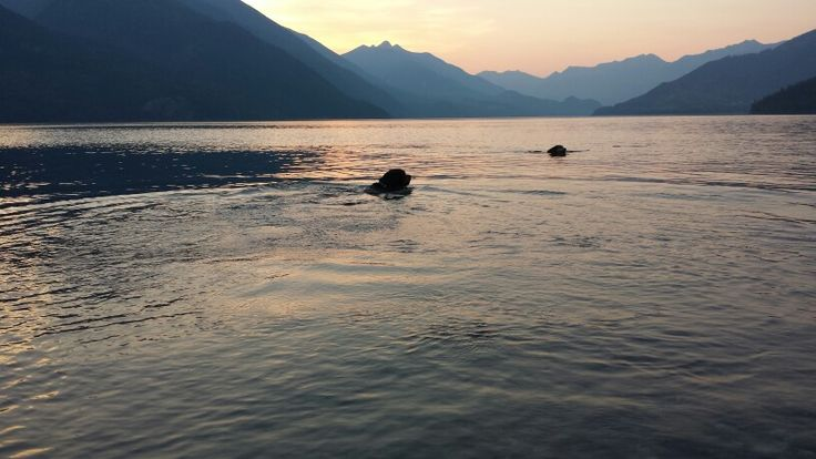 Evening dip in the lake