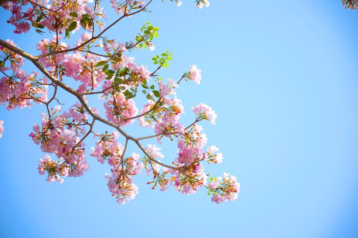 #background#  #bloom#  #blooming#  #blossom#  #blur#  #botanical#  #bright#  #close-up#  #delicate#  #environment#  #flora#  #flower#  #focus#  #garden#  #growth#  #leaves#  #nature#  #outdoors#  #petals#  #plant#  #purity#  #season#  #summer#  #tropical#  #wild#  #wild flower#  #yellow#