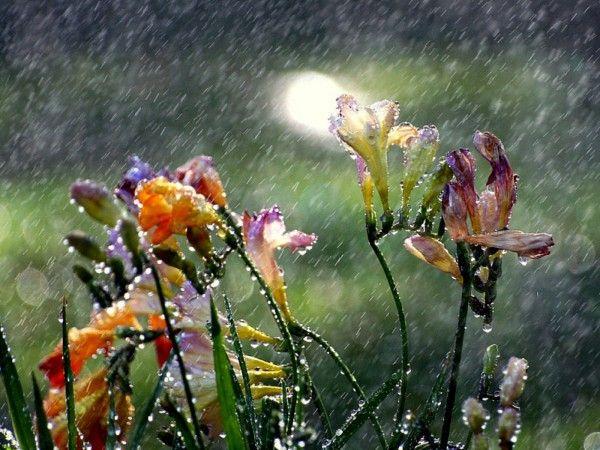 Дождь. Галерея фото