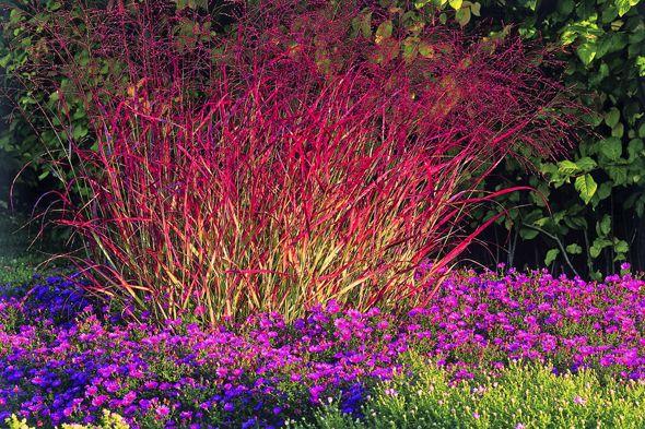 Gräser im Garten -Farngewächse