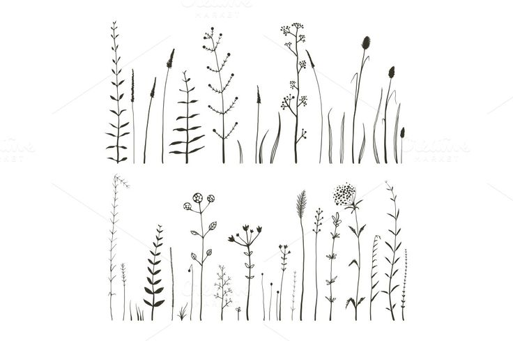 Sketchy Wild Field Flowers and Grass ~ Illustrations on Creative Market