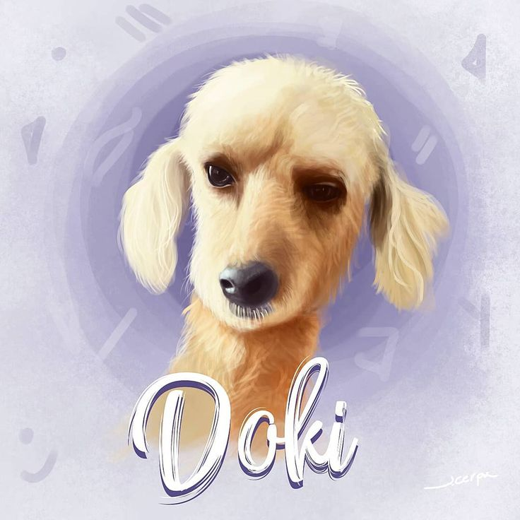 """46 Me gusta, 6 comentarios - Jerson Cerpa """"Jecko"""" (@jecko_jc) en Instagram: """"El guardián Doki.. @yaninabg #ilustracion #dog #digitalpainting #dogdrawing #phptoshop"""""""