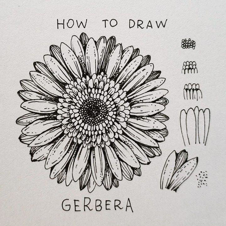 Alice On Instagram Gerbera Today S Flower Gerbera Step By Step It Could Seem Difficult In 2020 Sunflower Drawing Botanical Line Drawing Floral Drawing