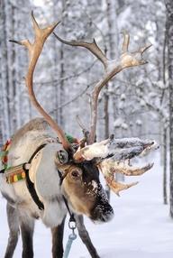Winter in Lappi, Lapland, Finland