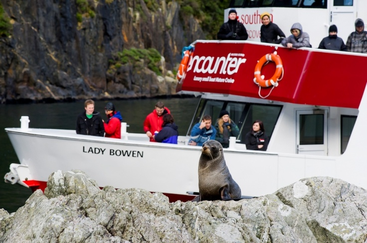 Get closer to nature with Southern Discoveries Encounter Nature Cruise when flying with Glacier Southern Lakes Helicopters