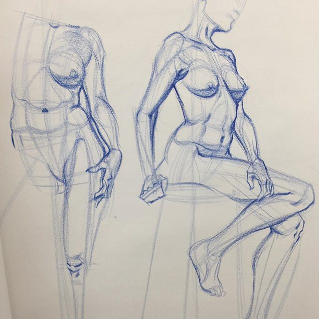 Female Anatomy Will Weston Student Work With Images Human
