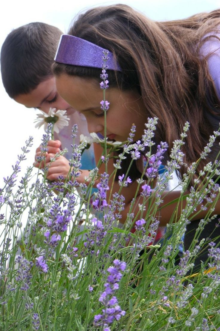 the scent of lavender & flowers