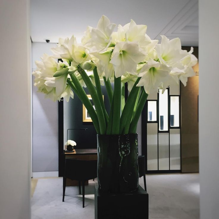 After the hustle and bustle of Valentine's Day, a bit of peace and quiet at the Jeager LeCoultre boutique in Geneva.  Flovers by Fleuriot fleurs, Geneva