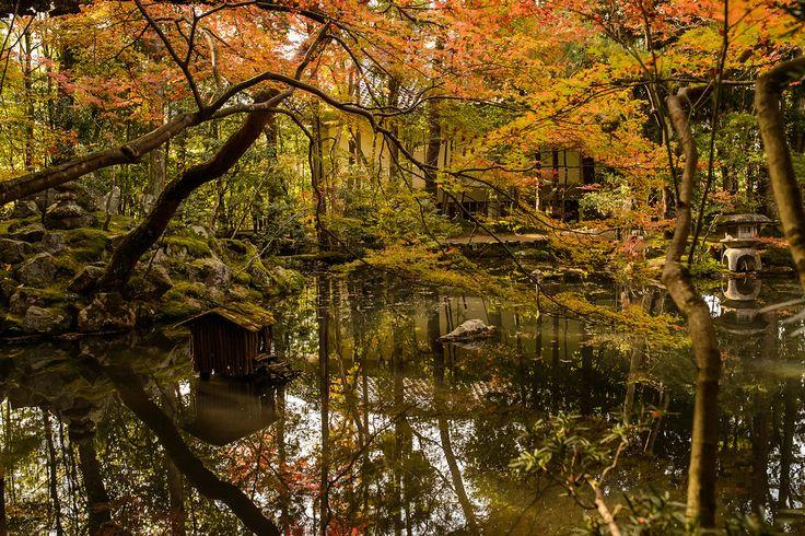 Kyoto Photo: Pond At Tenju-an Temple