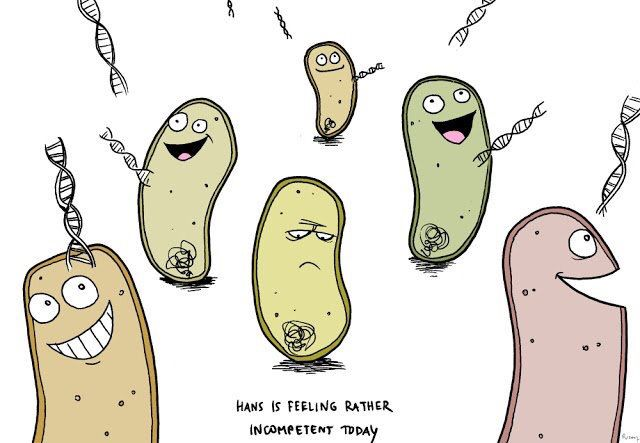Poor Hans, the incompetent cell. Haha! Nerdy! From Santa Cruz Biotech's Twitter feed