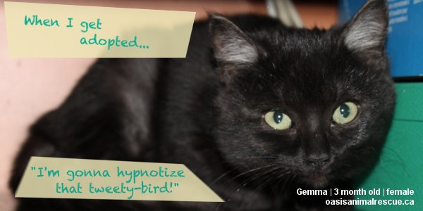 Rescue kittens at oasisanimalrescue.ca share their hope for the future.