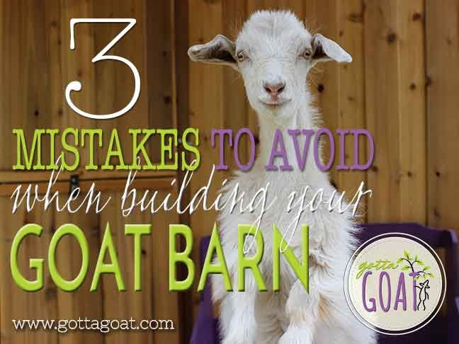 #goatvet says some good advice here about preventing goats from escaping or damaging their sheds