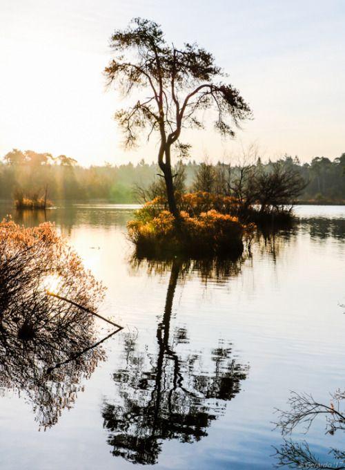 photosbygerardo:  Island in the stream