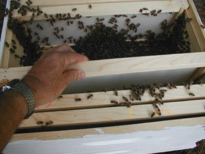 The Homestead Survival | How To Install Package Bees Into A Hive | http://thehomesteadsurvival.com