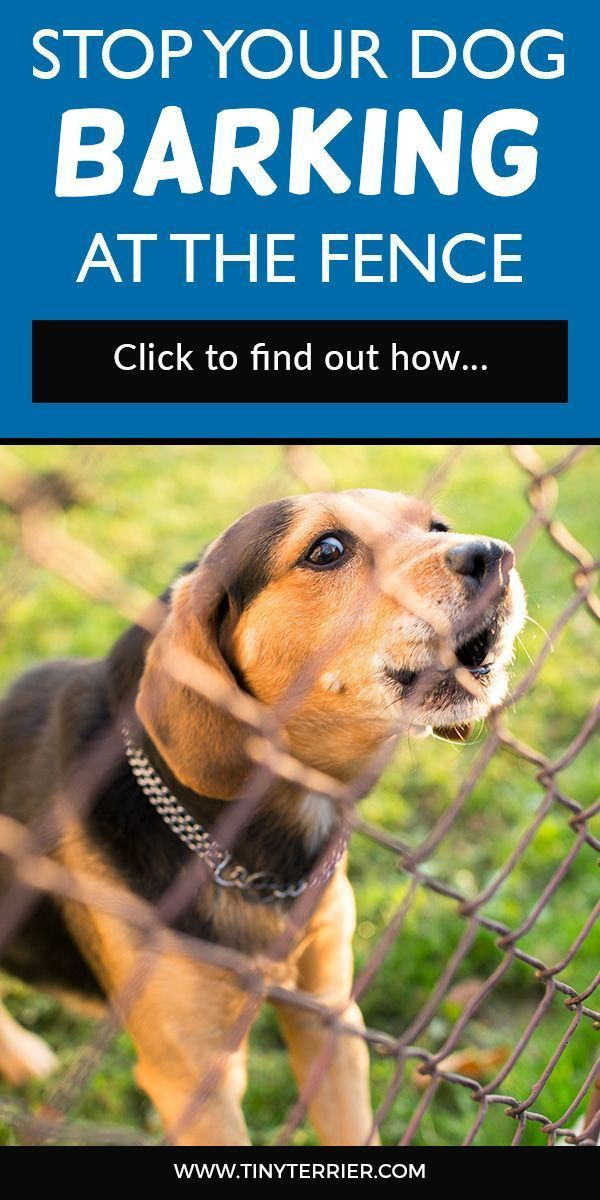 How To Stop Your Dog From Barking At The Fence Dog Barking Stop