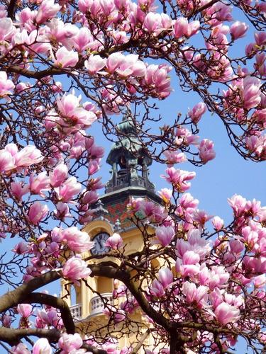 Travel: Szeged, Hungary