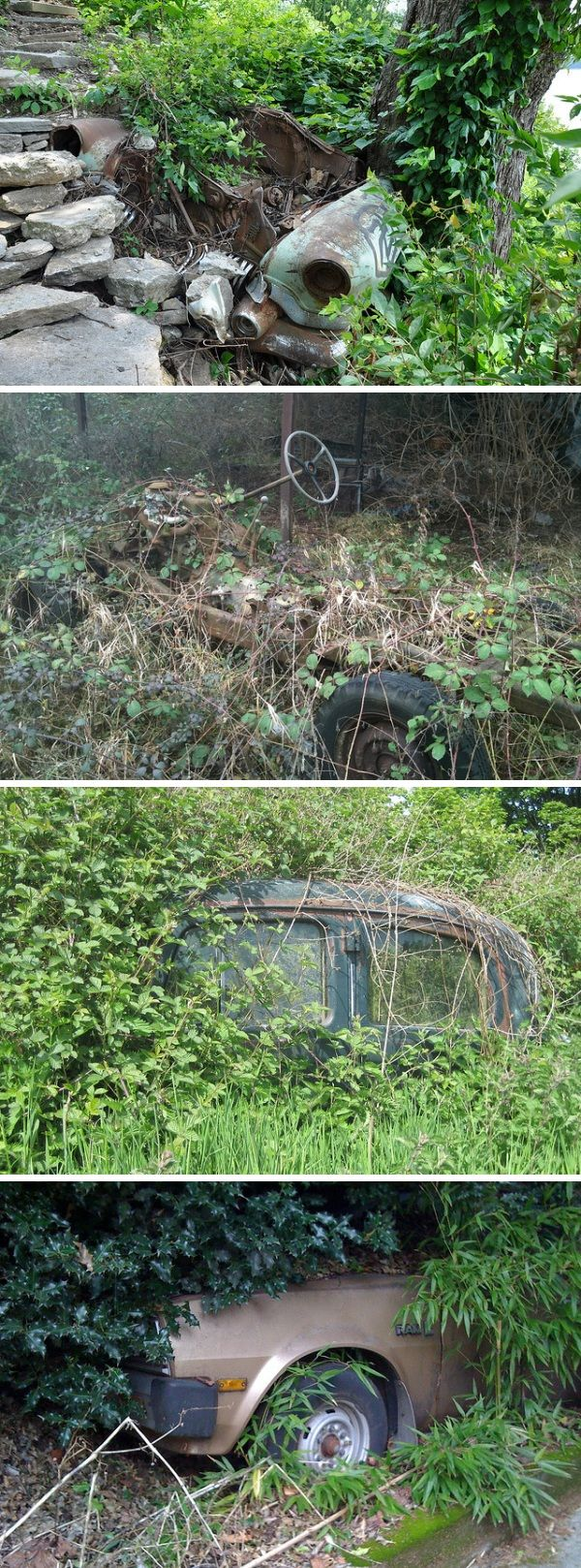 abandoned cars Wild Cars: 14 Abandoned Vehicles that have Officially Gone Green