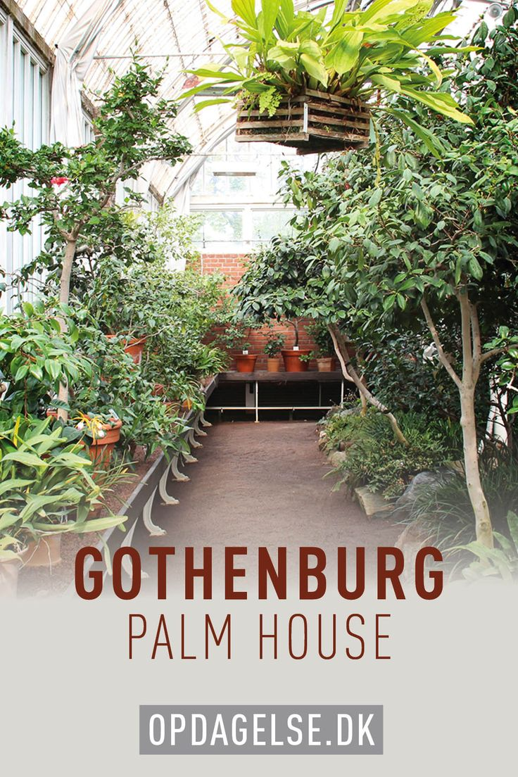 Palm house in gothenburg