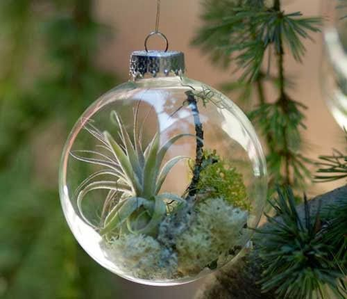 Glass Christmas Ornaments - want to try this with a plastic Christmas Ornament for my air plant.
