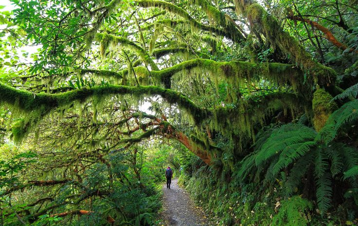 Walking on the Routeburn Track to Key Summit, in Fiordland National Park. #NewZealandwalkingtours #WalkingNewZealand #NewZealandVacations