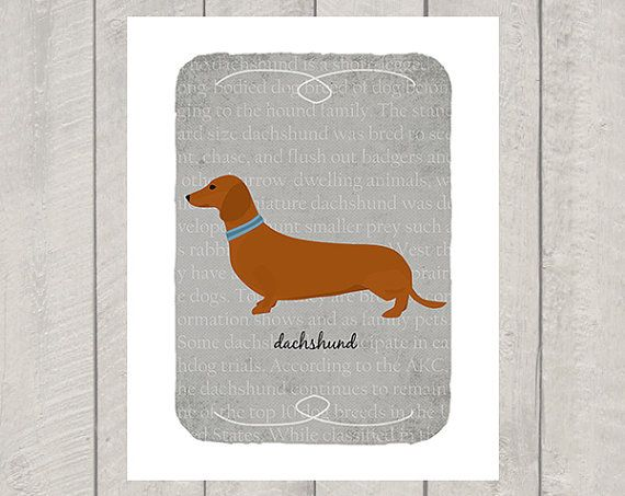 Dachshund breed - custom dog art print