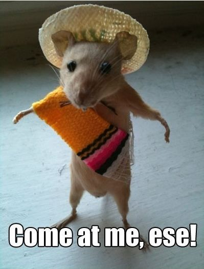 My coworker sent this to me and I just couldn't stop laughing! I can totally see it too with that mexican accent!
