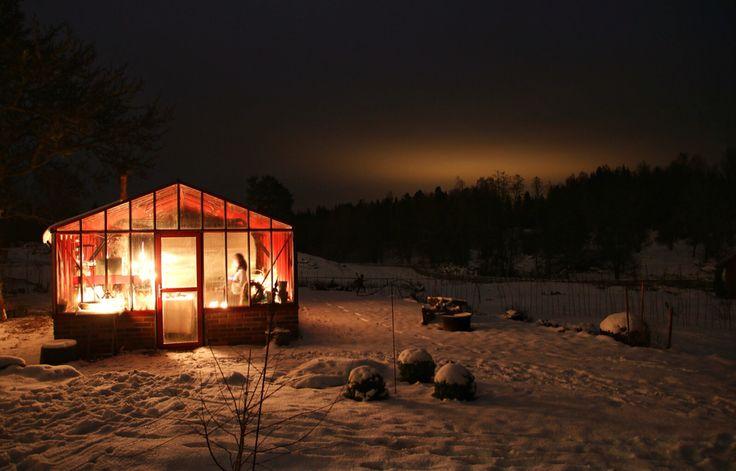 Ingebo Hagar  Växthus i januari