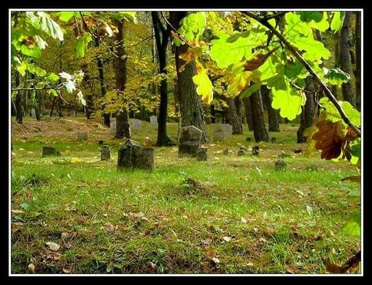"""Stary cmentarz z czasów I wojny światowej tzw. """"Rumuński"""""""