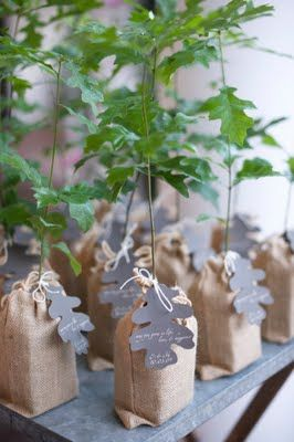 This would be nice as table centrepieces & take home gifts...trees, little trees for a family reunion?
