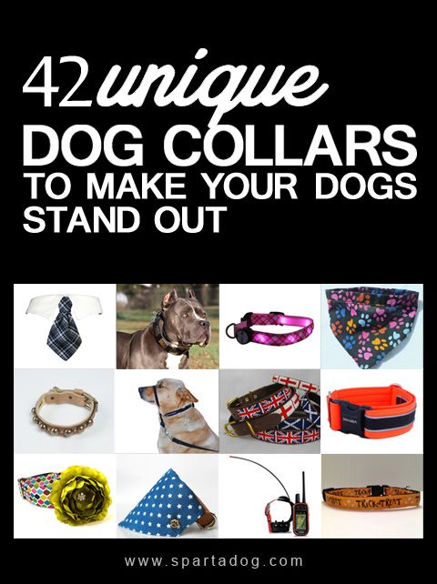 42 Unique Dog Collars To Make Your Dogs Stand Out