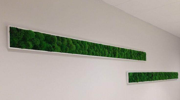 Moss fashion kaders in een volledig ecologisch procédé