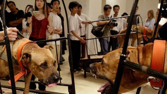 "Please take a moment to sign this Petition to stop a dog fighting ""art"" exhibit in #NYC https://www.change.org/p/alexandra-munroe-promote-cruelty-free-exhibits-at-the-guggenheim"