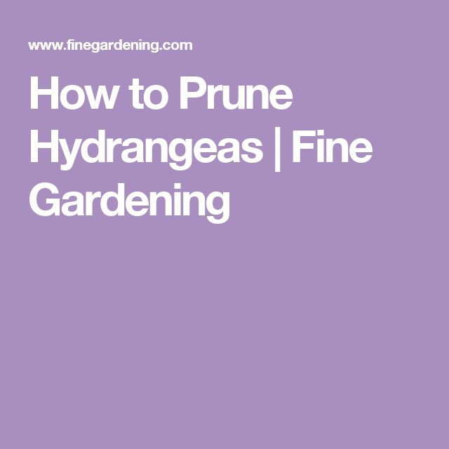 How to Prune Hydrangeas | Fine Gardening