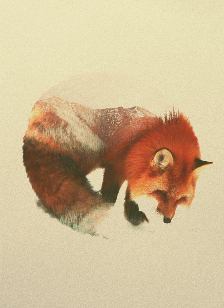 In Andreas Lies Fotografien werden Raubtiere, Wölfe zu farbintensiven Wald- und Berlandschaften andschaften.