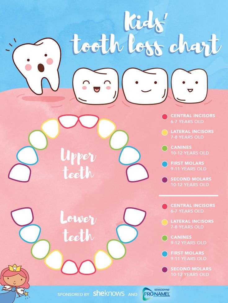 Be ready for the tooth fairy with this handy chart for kids' tooth loss.