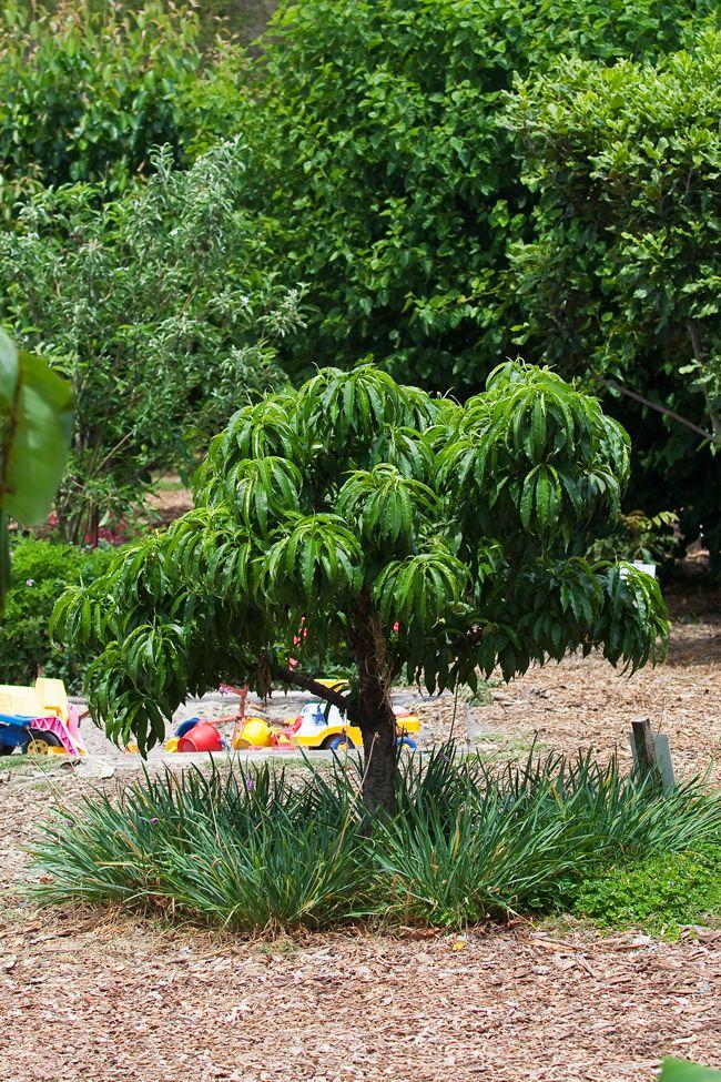 17 best Coastal garden ideas images on Pinterest | Coastal ...