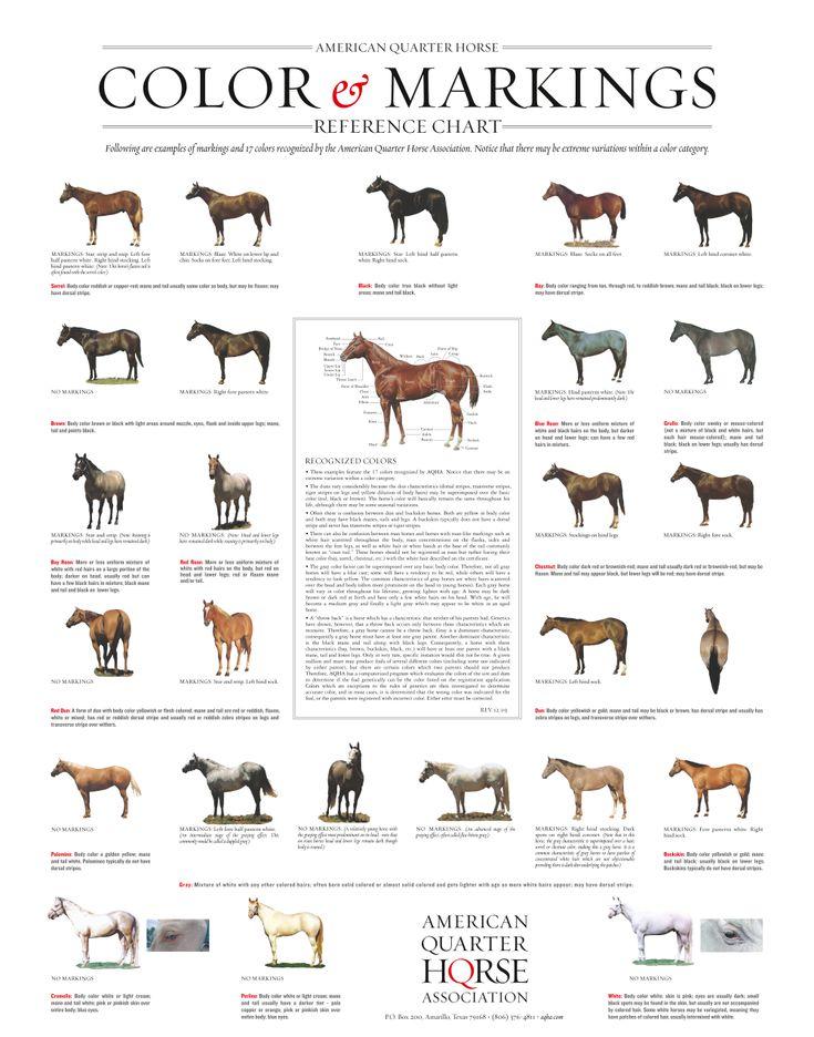 Quarter Horse Markings And Color Genetics Aqha Horse Markings Horse Color Chart Horse Coloring
