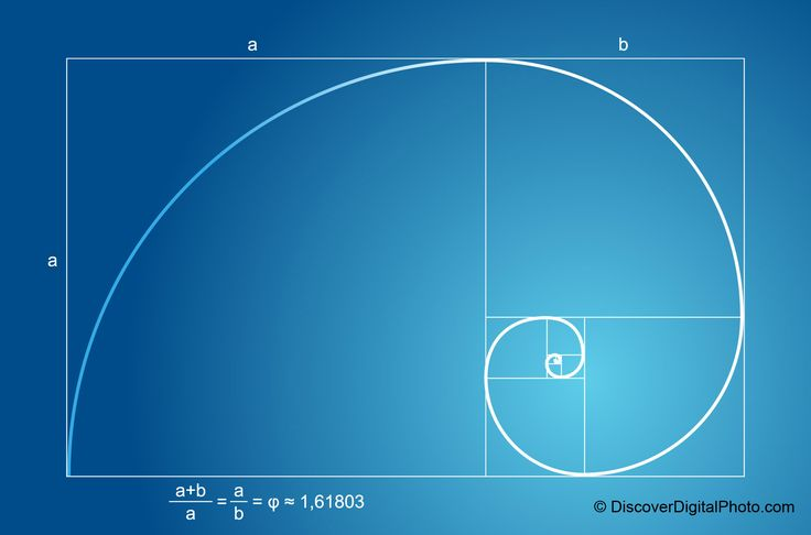 fibonacci spiral images in nature | Fibonacci Sequence | Catphi's Curiosities