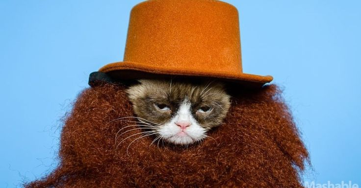 Grumpy Cat Wears Costumes to Hide From Fans [NEW PICS]